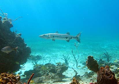Snorkeling Cat Island Bahamas
