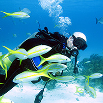 Diving,Snorkeling at Abaco Beach Resort in Bahamas