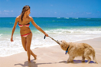 Pet Friendly accommodation at Guy Harvey Outpost Islander Resort