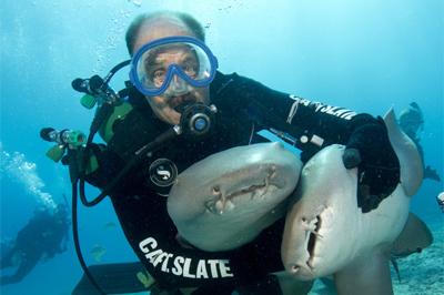Slate and Nurse Shark